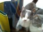 3匹の猫さん里親募集中です!