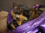 サビ猫のバッグ