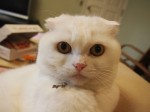 【お留守番猫さん】まんまるふくてくちゃん