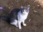 【里親募集中】3匹の猫さん引き続き里親募集中です