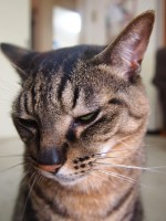 写真写りの悪い猫