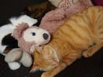 猫がメルヘンに寝てました