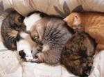 まだまだ5匹で猫団子