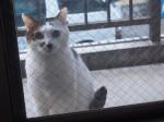 なんか見てる猫がいる