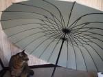 傘に群がる猫