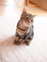 【お留守番猫さん】甜ちゃん、キュンキュンしすぎて大変でした