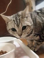 【お留守番猫さん】ウレシウレシのパトコちゃん