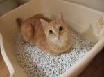 そこは猫ベッドじゃないですよ、トイレですよ