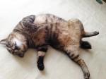 夏の猫さんお留守番中のエアコン使用について