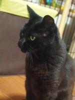 【お留守番猫さん】黒猫さんは難しい!