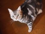 【お留守番猫さん】シャーシャーレインちゃん