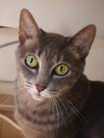 【お留守番猫さん】大き目あいちゃんと小さ目フーちゃん