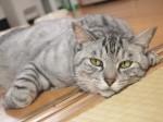 【お留守番猫さん】のんびりまったりなりくちゃん