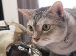 【お留守番猫さん】匂いチェック完了後のごろにゃん