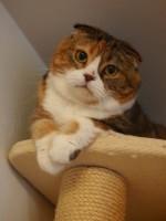 【お留守番猫さん】頂上でちょこんと座るモモちゃん