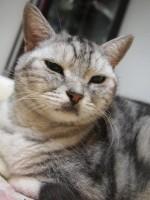 【お留守番猫さん】眠たいりゅうちゃん