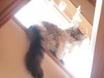 【お留守番猫さん】後光のミウちゃん