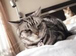 【お留守番猫さん】猫次郎さんと麻衣ちゃん、子猫のマメちゃんに圧倒されてます!