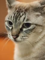 猫撮りに!OLYMPUS 単焦点レンズ M.ZUIKO DIGITAL 45mm F1.8を新たに購入しました!