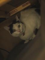 【お留守番猫さん】ミィちゃん、ケィちゃんカルカン大作戦