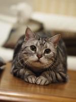 【お留守番猫さん】三つ指をついているわけではありません
