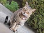 【お留守番猫さん】お庭に登場とらごろうさん