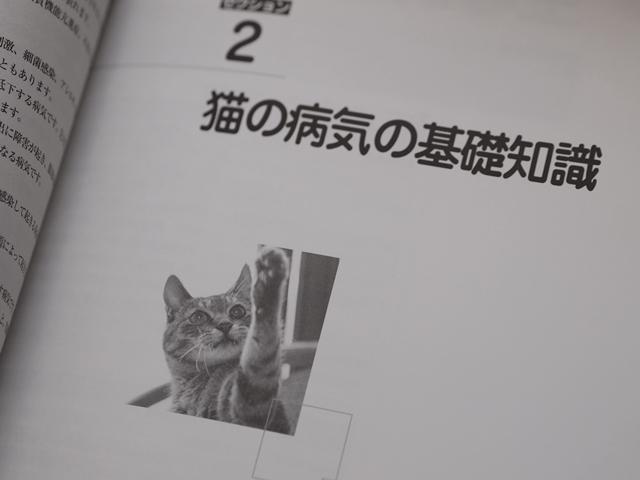 がくぶんペット介護士講座テキスト猫の病気