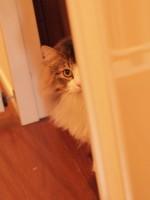 【お留守番猫さん】家政婦は見た状態のタオちゃん