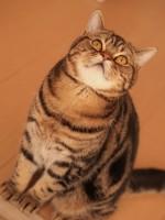 【お留守番猫さん】甜ちゃん大きくなりました!