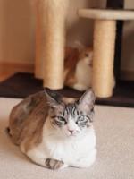 【お留守番猫さん】松雪ちゃんの後ろ