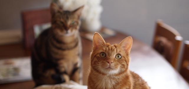 猫専門ペットシッターの利用案内